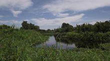 danau-janda-gatal-di-rohil-kok-bisa-sih-namanya-seperti-itu