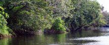 uniknya-flora-dan-fauna-di-hutan-perawan-kerumutan-kabupaten-pelalawan
