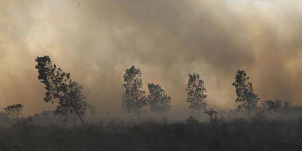 Penegakan Hukum, Kunci Atasi Bencana Asap di Sumatera-Kalimantan