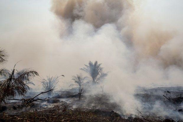Hutan Terbakar, Potensi Keragaman Hayati pun Musnah
