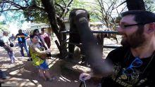asyik-selfieselfie-seekor-gajah-marah-dan-tampar-pria-ini