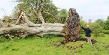 pohon-yang-tumbang-akibat-dihantam-badai-ungkap-misteri-pembunuhan-1000-tahun-lalu