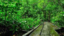 wisata-di-balik-legenda-putri-tujuh-di-dumail-mitos-hantu-berganti-bandar-bakau
