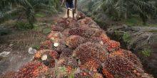 walhi-ada-izin-pembangkit-listrik-diubah-jadi-izin-kelapa-sawit