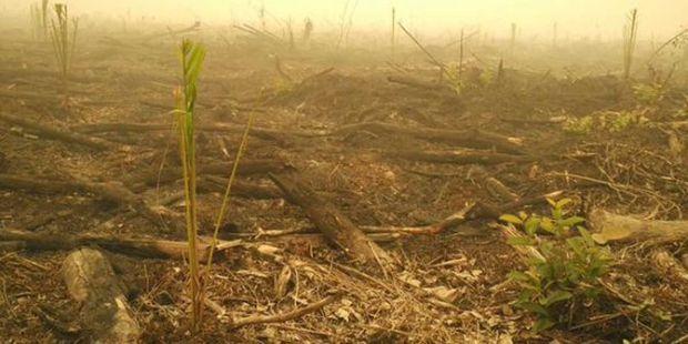 Walhi Sebut Ada 400 Perusahaan Diduga Terkait Kebakaran Hutan