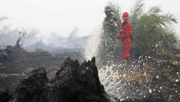 DPR Minta Jokowi Larang Penanaman Sawit di Lahan Terbakar