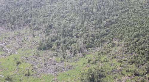 Polisi Hancurkan Gubuk Milik Perambah Hutan Suaka Margasatwa Kerumutan Pelalawan