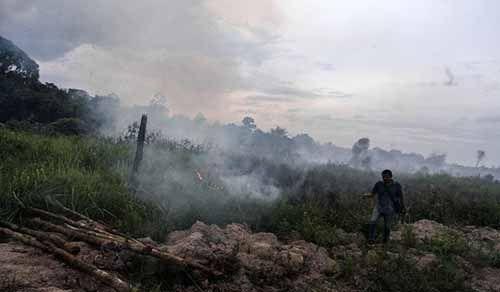 Dua Titik Api Terdeteksi di Pelalawan dan Rokan Hulu