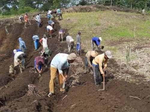 Riau Jadi Provinsi Pertama yang Terima Redistribusi Lahan dari Izin Pengelolaan Hutan Sosial