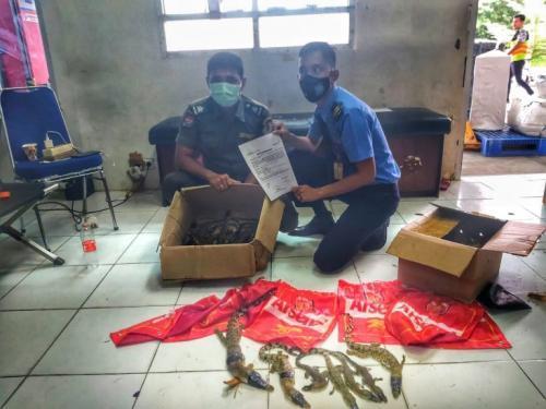 15 Ekor Buaya dalam Keadaan Hidup Coba Diselundupkan dari Bandara SSK II Pekanbaru, Pengirimnya Terdeteksi Tinggal di Siak