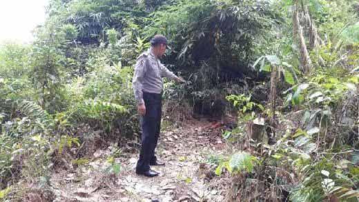 Pemburu Babi Hutan Temukan Tengkorak Manusia Ditutupi Kayu dan Daun Kering di Kebun Desa Kampungpinang Kampar, Behel Masih Menempel di Gigi