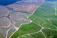 duh-luas-hutan-riau-hanya-tinggal-1442669-hektar