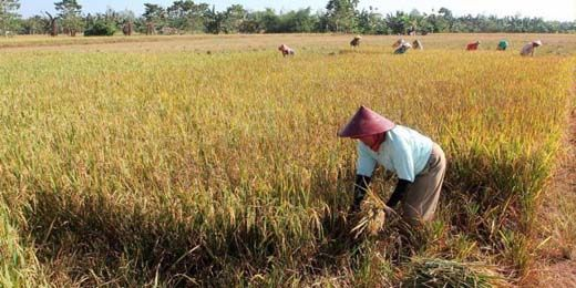 73 Orang Raih Penghargaan karena Kedaulatan Pangan, Ada yang dari Kuansing