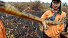 ular-berkaki-kembali-ditemukan-dalam-keadaan-hangus-di-areal-karhutla-wilayah-indragiri-hulu