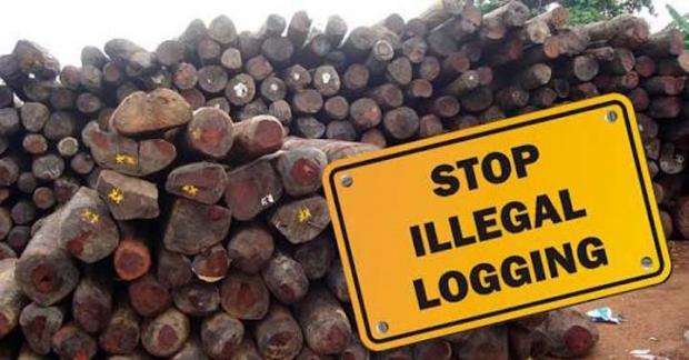 Sejumlah Orang Datangi Polisi di Kampar, Tak Terima Dua Sopir Pembawa Kayu Hasil Jarahan dari Hutan Lindung Diamankan