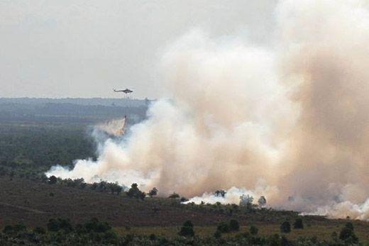 Luas Hutan dan Lahan yang Terbakar di Riau Diklaim Berkurang 50 Persen