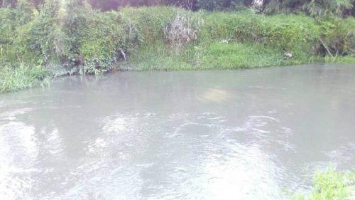 PT Tasma Puja Diduga Buang Limbah ke Sungai Kuamang Kampar