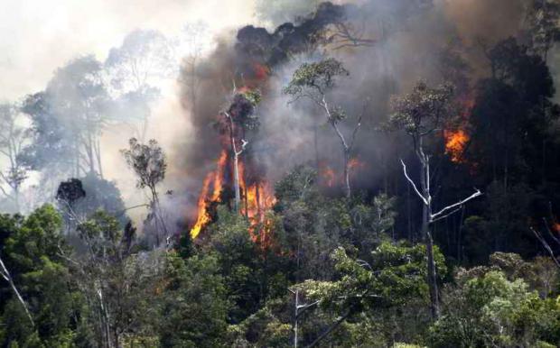 Empat Hektar Lahan Terbakar di Rokan IV Koto Rohul