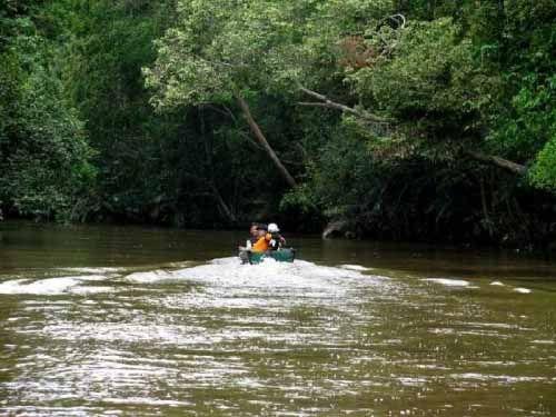 """Hanya Tersisa Seluas 30 Ribu Hektar, Taman Nasional Tesso Nilo di Kabupaten Pelalawan Sedang """"Berjuang"""" Melawan Perusak Lingkungan"""