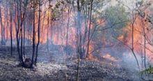 kabut-asap-kembali-mengancam-dua-hotspot-terdeteksi-di-provinsi-riau