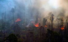 meski-diguyur-hujan-deras-riau-tetap-dilanda-kebakaran-hutan