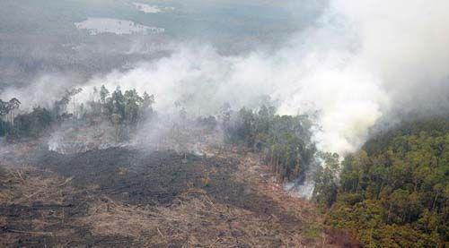 Tujuh Titik Panas Mulai Terpantau di Riau, Paling Banyak Siak