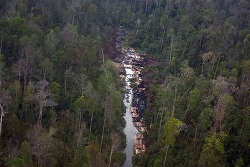 Dalang Perambahan Hutan Cagar Biosfer di Kabupaten Bengkalis Dibekuk