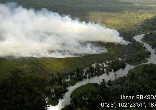 Kawasan Gambut di Kecamatan Kerumutan Pelalawan Terbakar, Asap Mengepul ke Udara