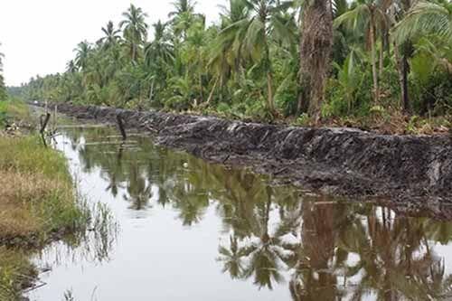 Selamatkan Kebun Kelapa Masyarakat Inhil, Tanggul Sepanjang 400 Km Dibangun Tahun Ini