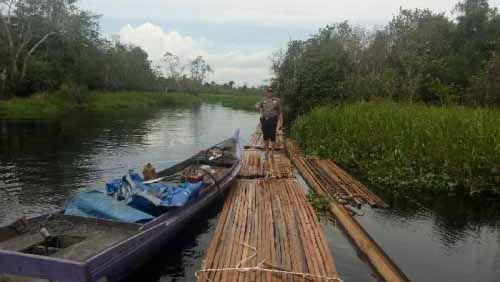 Razia Besar-besaran di Hutan Suaka Margasatwa Kerumutan Pelalawan, 60 Kubik Kayu Hasil Pembalakan Liar Ditemukan di Sungai