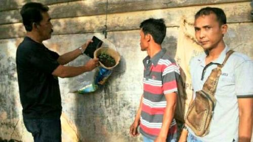 Niat Hendak Geledah Rumah Pengedar untuk Cari Sabu, Polisi di Rohul Malah Dapat 12 Batang Ganja