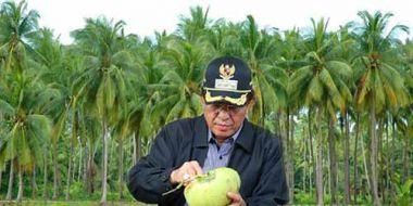 petani-inhil-jangan-mau-tergoda-jual-kebun-kelapa