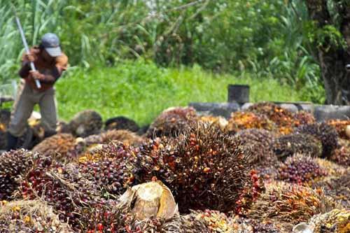 Presiden Jokowi Didesak Cabut Izin Usaha PT Wilmar Nabati Indonesia, PT Musim Mas, dan PT Ciliandra Perkasa