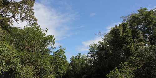 Pemerintah Tetapkan 24 Lokasi <i>Pilot Project</i> Hutan Sosial, Kabupaten Pelalawan Salah Satunya