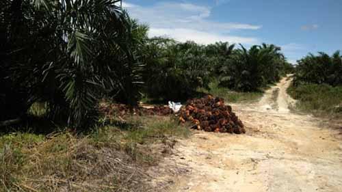 Ribuan Hektar Lahan Negara di Desa Segati Pelalawan Dikuasai Mafia Tanah, Jikalahari: Mereka Ini Penjahat
