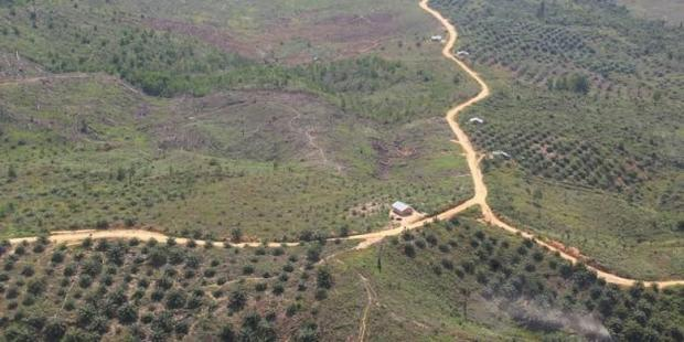 25 Hektar Lahan Taman Nasional Tesso Nilo Pelalawan Terbakar