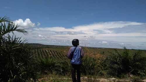 Lahan Eks PT SRT di Desa Segati Pelalawan Akan Dijadikan Hutan Desa, Kementerian LHK Siap Proses Hukum Para Cukong Tanah