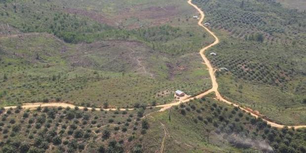 Lahan Taman Nasional Tesso Nilo Pelalawan Terbakar, Jumlah Titik Panas Meningkat