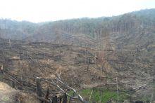 dalangnya-diduga-oknum-dprd-puluhan-hektar-kawasan-tnbt-inhu-dibabat-warga