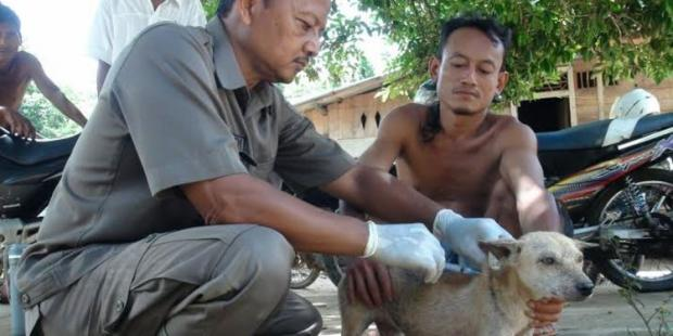 246 Orang di Riau Tergigit Hewan Penular Rabies