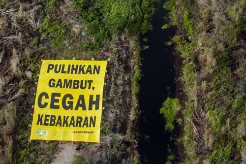 Pastikan Tidak Ada Penerbitan Izin Baru, Presiden Jokowi Komitmen Restorasi Lahan Gambut di Riau