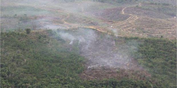 Patroli Udara TNI AU Temukan Taman Nasional Tesso Nilo di Pelalawan Dibakar