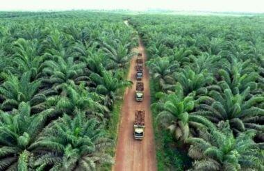 PT Agro Abadi Miliki 4.783 Hektar Lahan di Luar HGU?