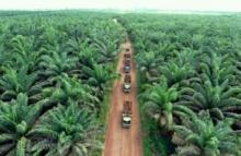pt-agro-abadi-miliki-4783-hektar-lahan-di-luar-hgu