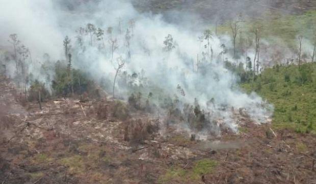 Duh... 2,4 Juta Lahan Gambut di Riau Dinyatakan Kritis