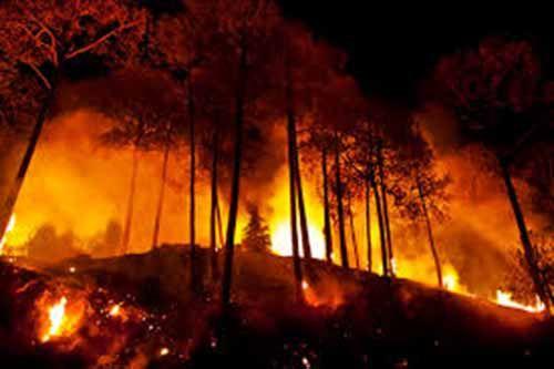 Gawat! Diduga Ada yang Sengaja Membakar Lahan Hutan Riau