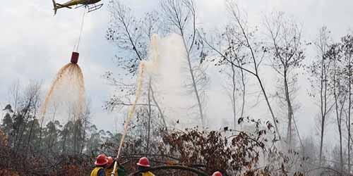 Waspada Kebakaran Hutan dan Lahan! Satelit Deteksi 5 Titik Api di 4 kabupaten di Riau