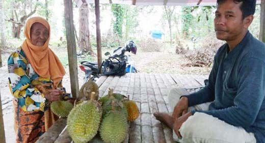 """Melihat Aktivitas """"Pemajak"""" Durian di Kampar Kala Musim Panen Tiba"""