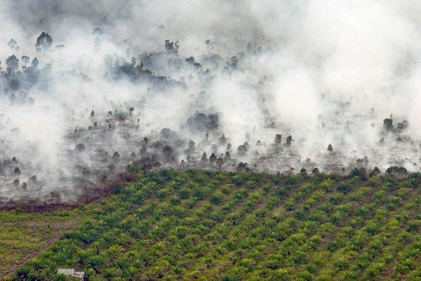 Tiga Tim Satgas Bentukan Gubernur Riau Siap Tertibkan Kebun Sawit Ilegal