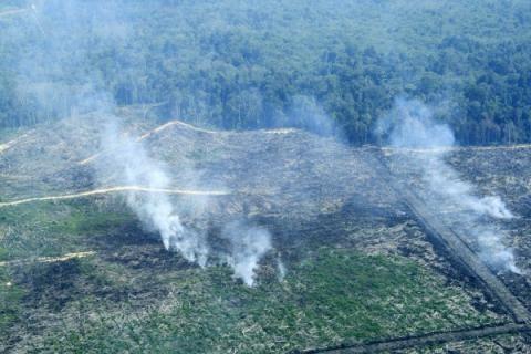 Bakar Ribuan Hektar Hutan, MA Denda PT Kallista Alam Rp366 Miliar, Menyusul PT National Sago Prima di Riau